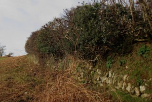 Bats & Dartmoor Hedges – a farmers view