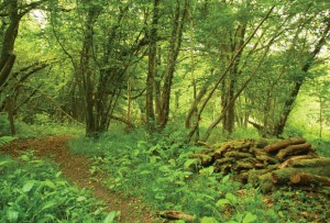 bat conservation woodland