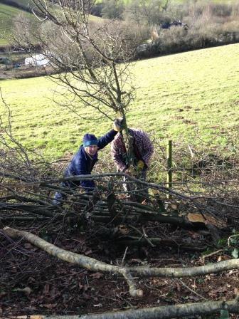 Hedgelaying practical task