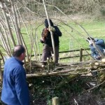 Learning new hedgelaying skills