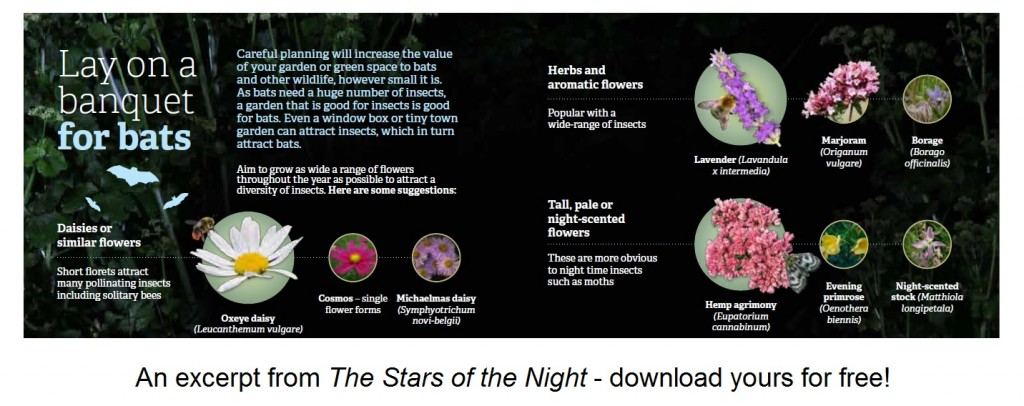 A screenshot taken from the Stars of the Night booklet