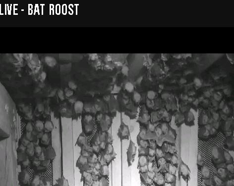 roost-snip-220715