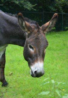 donkey snip