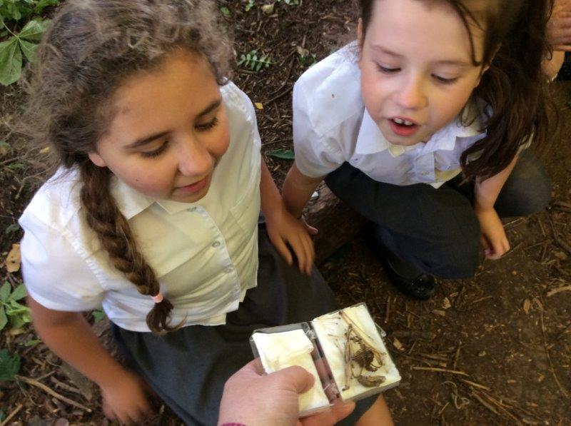 Seaton Primary looking at bat skeletons