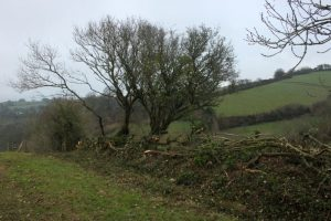 Hedgelaying for horseshoes